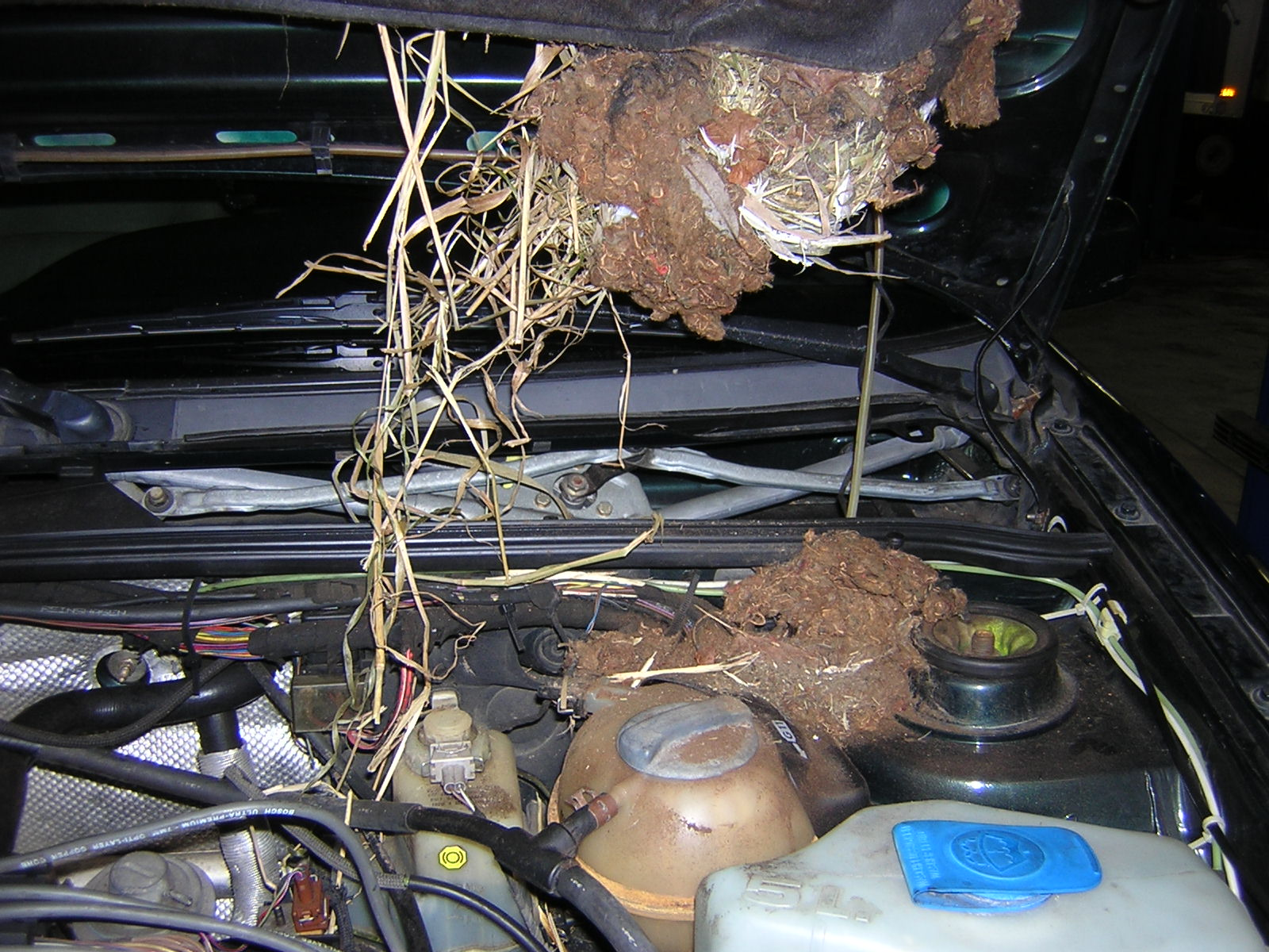 Rodents in your car michael 39 s auto repair for Chicago fine motors mccook il
